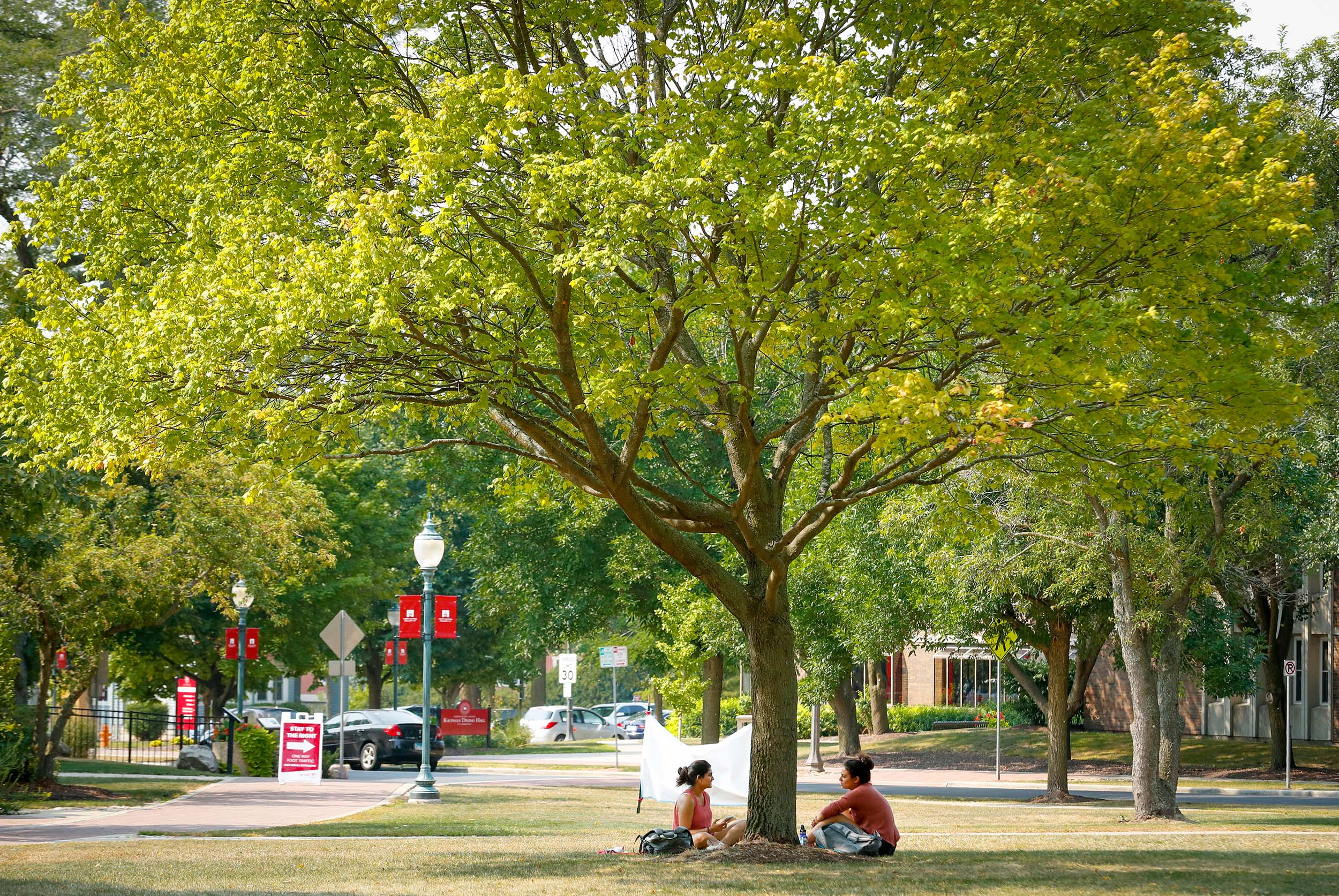 two students sitting under tree
